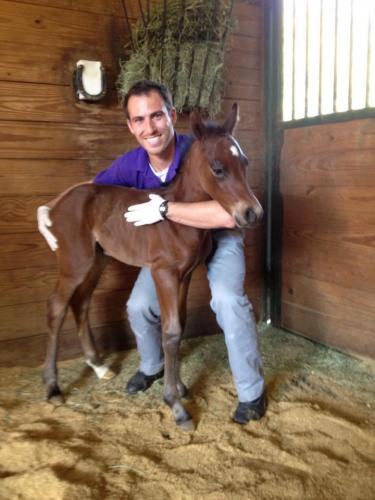 baby-horse-2 orig